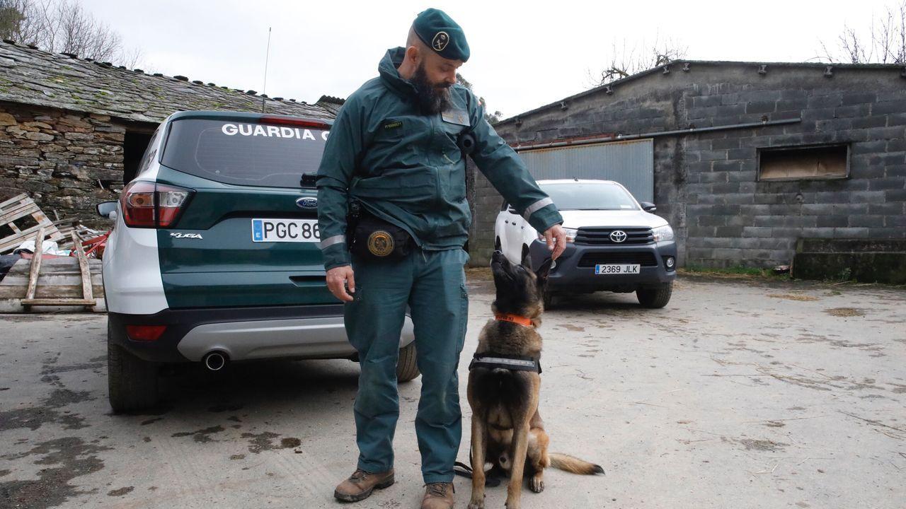 Tor, el perro del servicio cinegético de la Guardia Civil de Gijón que encontró a la mujer desaparecida en Basille.Bodegas como Algueira realizaron en los últimos años pruebas con barricas de roble gallego
