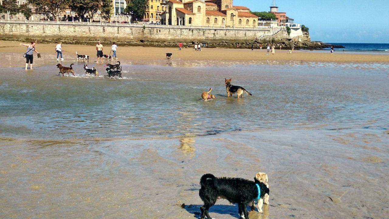 Chequeo al paseo de Coira.Perros en la playa de San Lorenzo, en el primer día tras el cierre de la temporada de baños