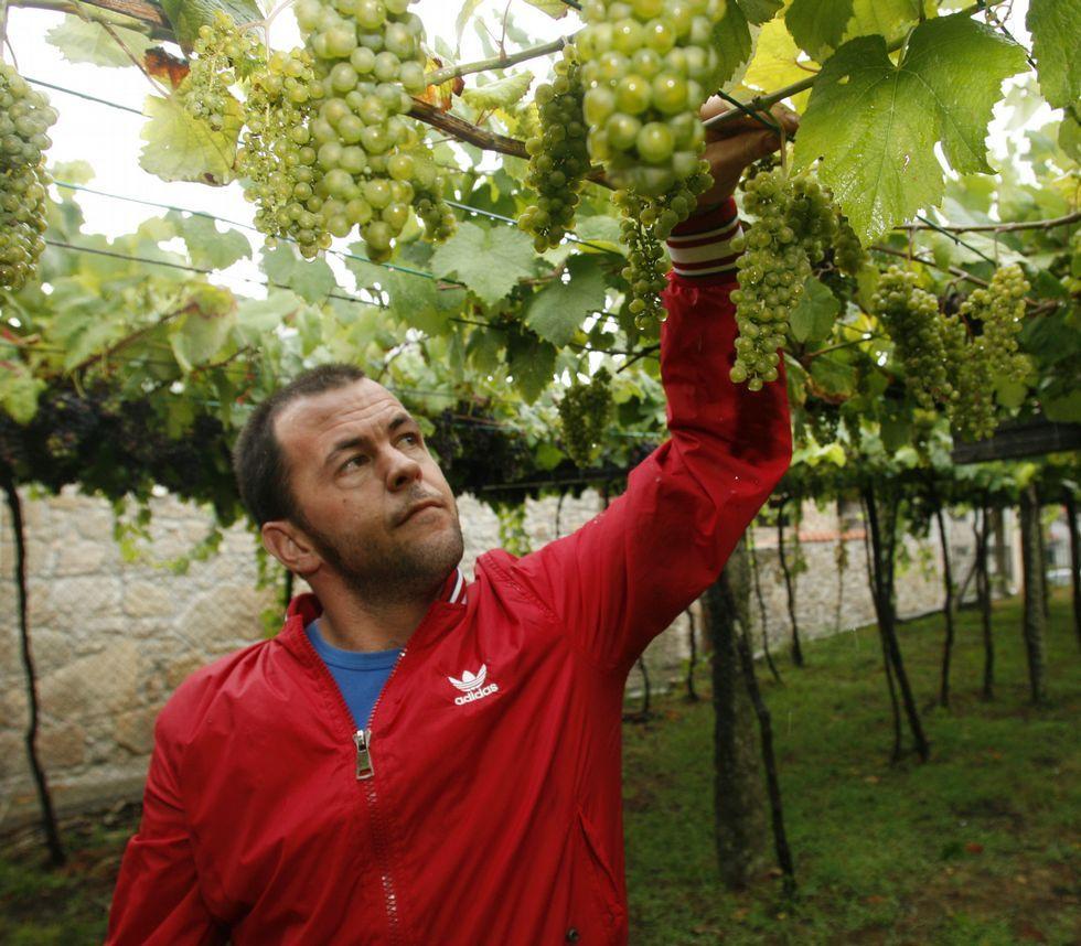 En sus viñedos, Luciano Cepeda Torres cultiva uvas de las variedades albariño, caíño y ratiño.
