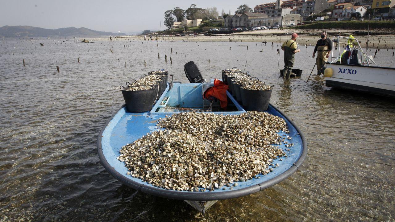 Muerte del marisco en los viveros de Carril.Vista desde las obras de A Graña de la zona de la ría donde se construirá el puente