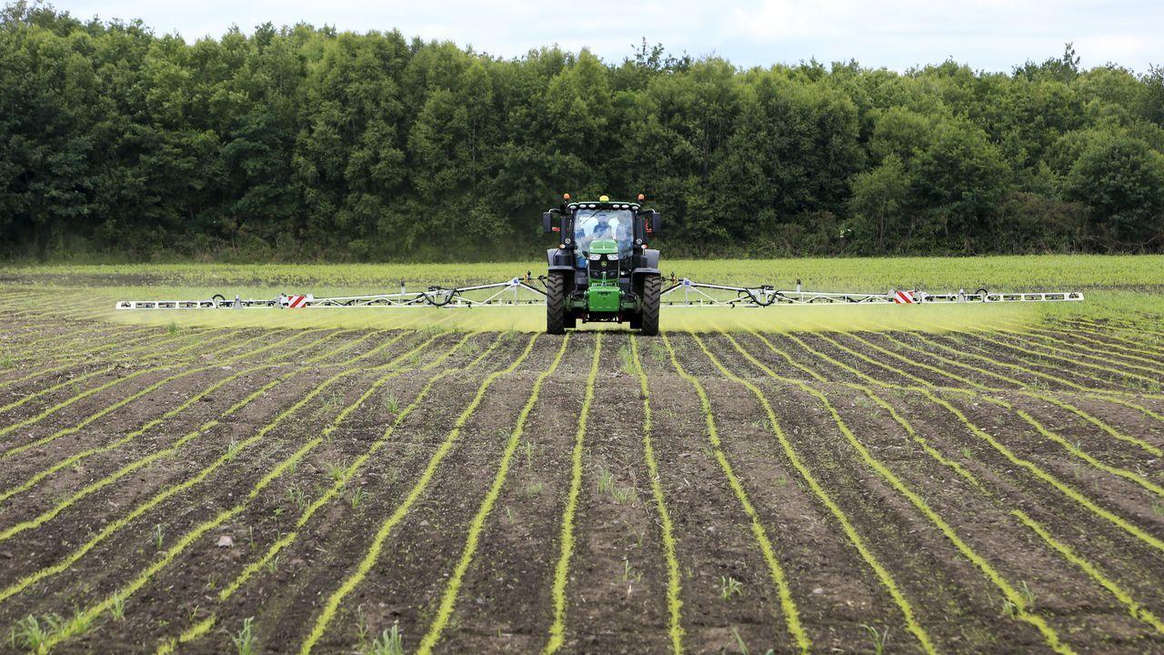 Los trabajos de construcción de un parque eólico, por dentro.Un tractor aplica el herbicida sobre el campo sembrado de sorgo