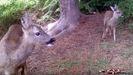 A vida diaria da fauna salvaxe do Val do Neira a través dunha cámara de fototrampeo