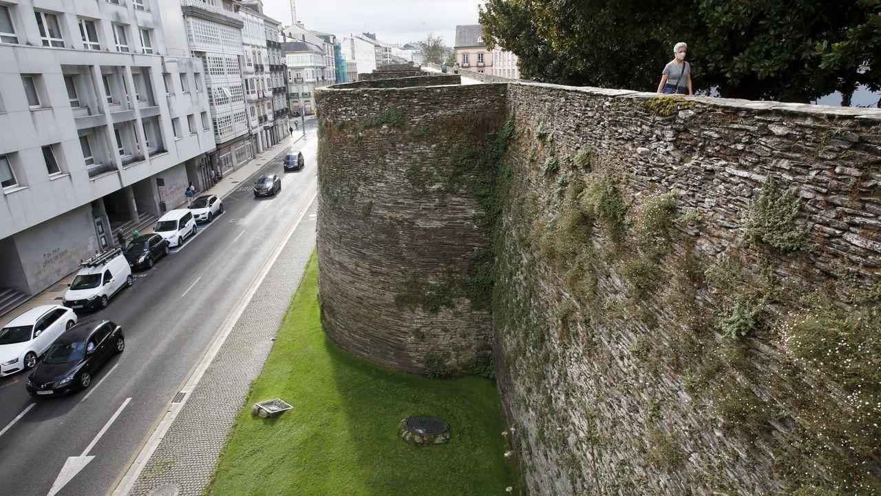 Los daños que sufre la Muralla de Lugo.Las malas hierbas crecen en todos los rincoles de la Muralla, a la espera de que las corten
