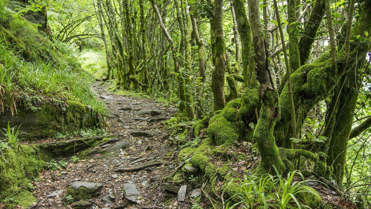 Uno de los senderos que atraviesan el bosque más conocido de O Courel