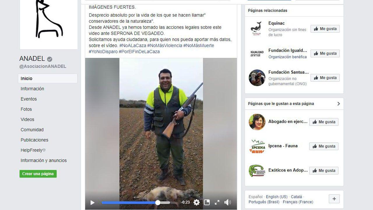 Anadel busca ayuda ciudadana para localizar al autor de un ataque salvaje a un zorro
