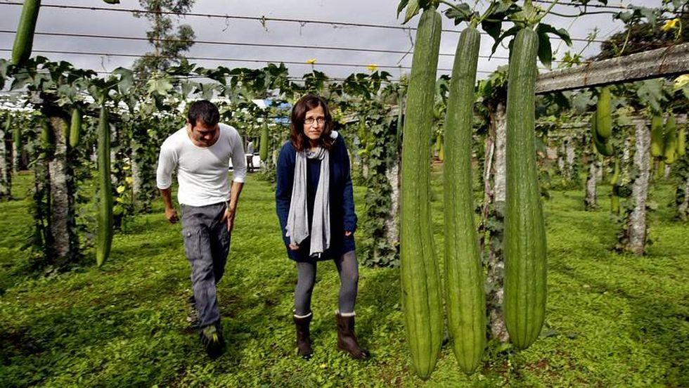 Una Firma De Caldas Pionera En El Cultivo De Esponjas Vegetales