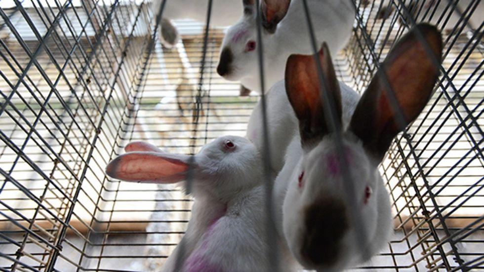 Igualdad Animal Alerta Sobre Los Problemas De Bienestar De Los Conejos En Las Granjas Españolas