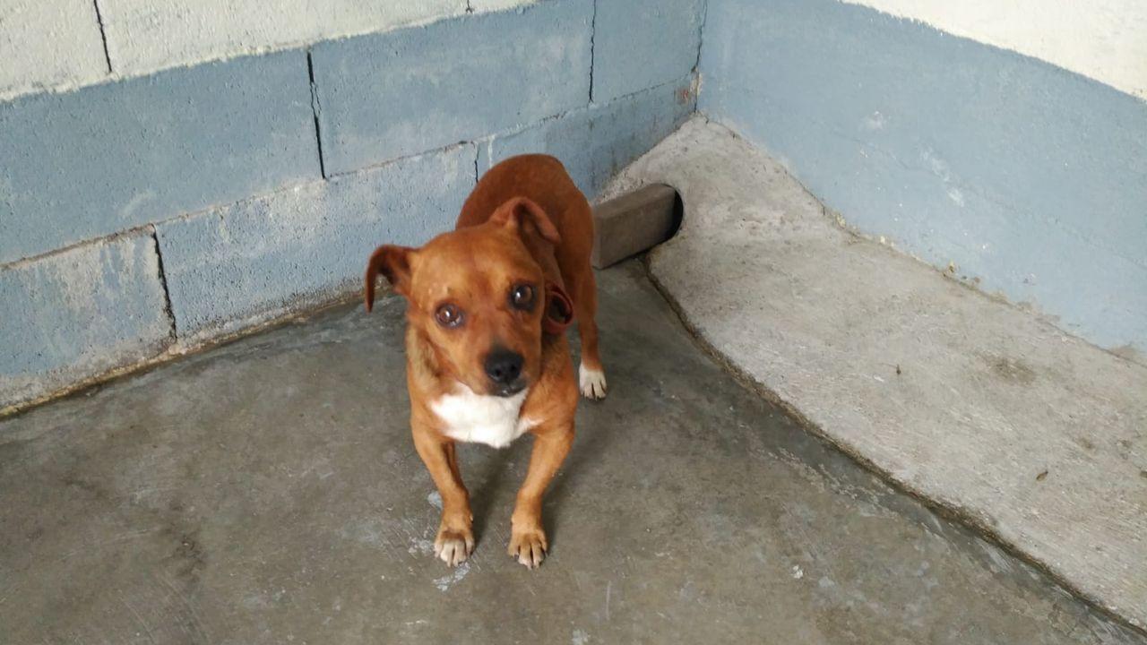 Rescate del perro abandonado en un contenedor de basura de Pontevedra.Lara Álvarez