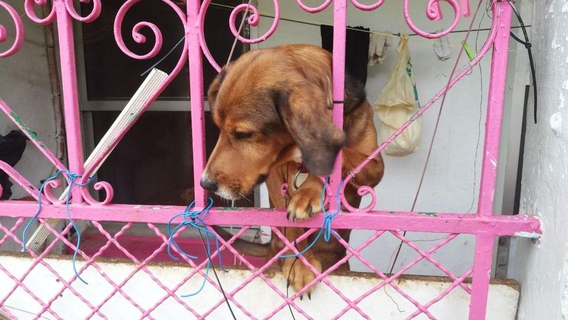 Así vivían los perros rescatados en una casa okupa de Vigo. Ada Colau es alcaldesa de Barcelona gracias a Ciudadanos, cuyo apoyo rechazaba en principio