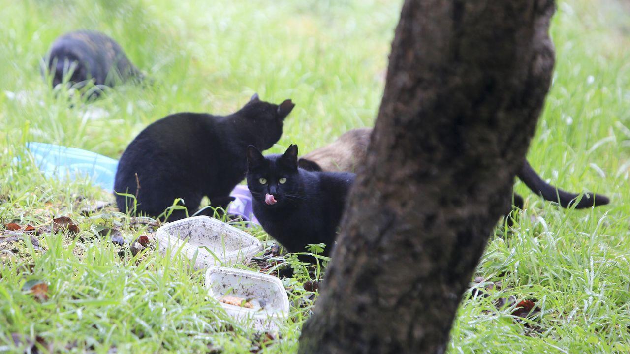 En Lugo hay cerca de una veintena de colonias felinas controladas