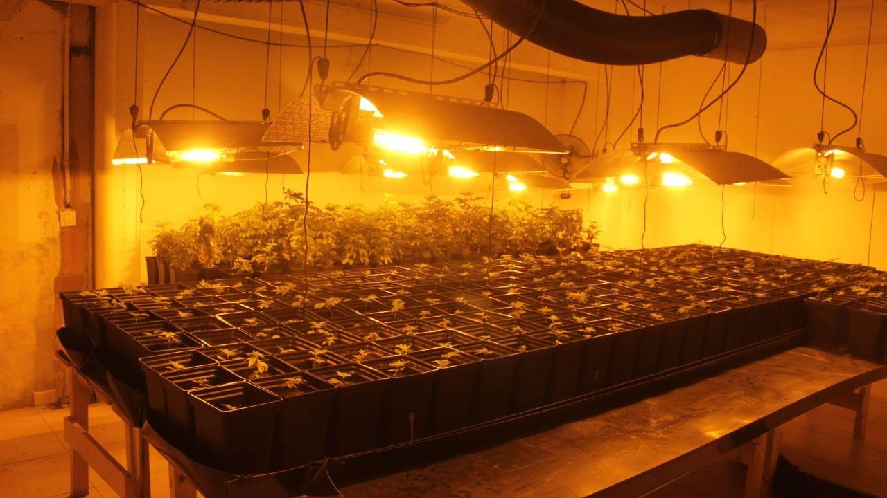 Plantación incautada en el hotel sin actividad localizado en Aranga