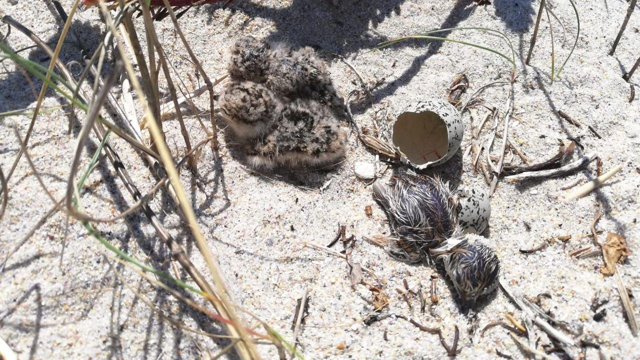 Los niños del colegio de Caión retiraron plásticos de la playa.Imagen de archivo de marisco apresado a furtivos