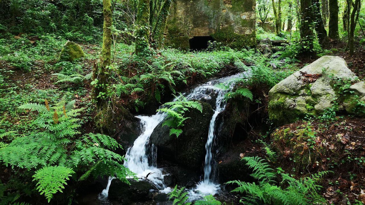 Rego das Cunchas: Un bosque de ribera de 3,5 kilómetros con especies autóctonas se recorre con una dificultad baja.