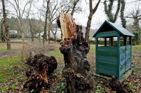 Aspecto que presentaba ayer la carballeira de Caldas, con algún árbol muerto en el suelo.