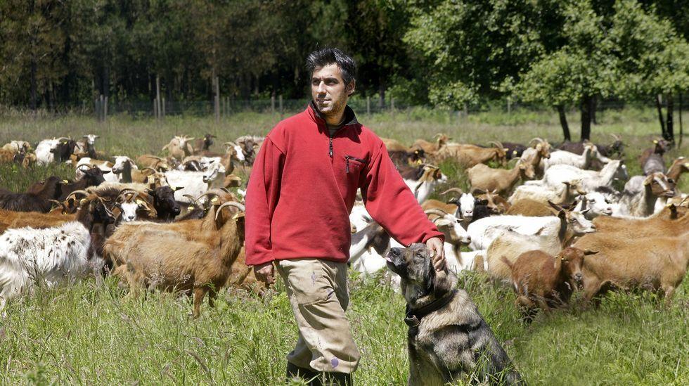 Joan Alibés, un joven catalán asentado en Meira, con el rebaño de cabras y ovejas cuyos productos vende a través de la Red.