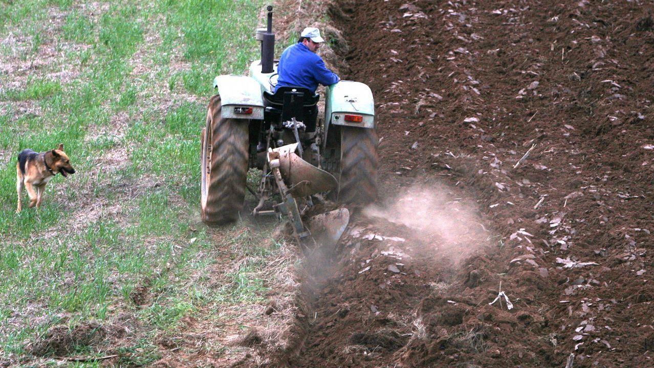 Unos 32.000 agricultores y ganaderos gallegos reciben actualmente ayudas de la PAC