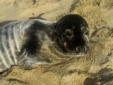 La foca salió del mar a primera hora de la tarde.