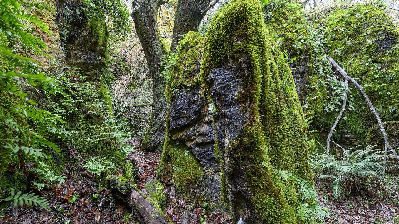 Recorrido visual por un laberinto de rocas, árboles y musgo