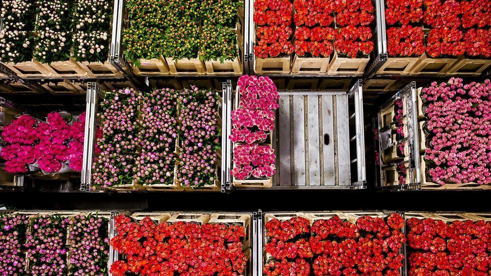 Vista general de los cajones de flores subastados en la subasta «FloraHolland» celebrada en Aalsmeer (Holanda)