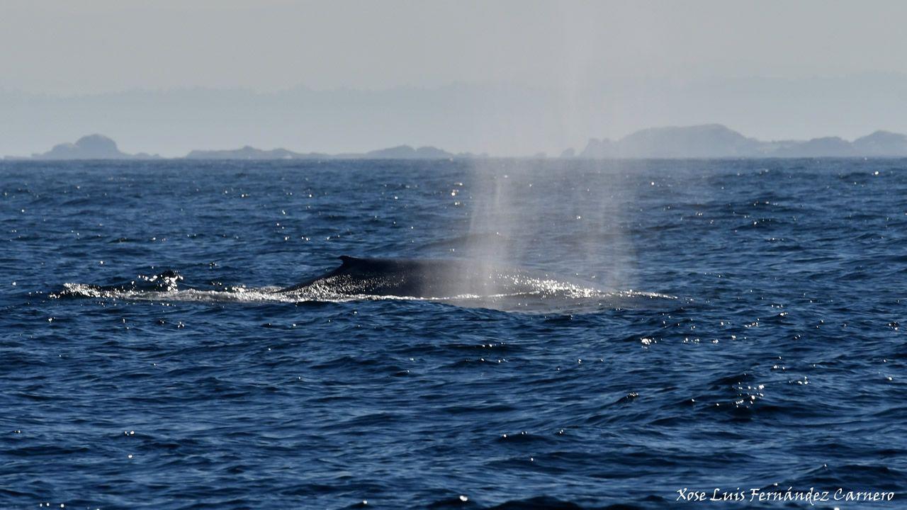 Es la primera vez en décadas que se ven dos ballenas azules juntas en aguas de Galicia