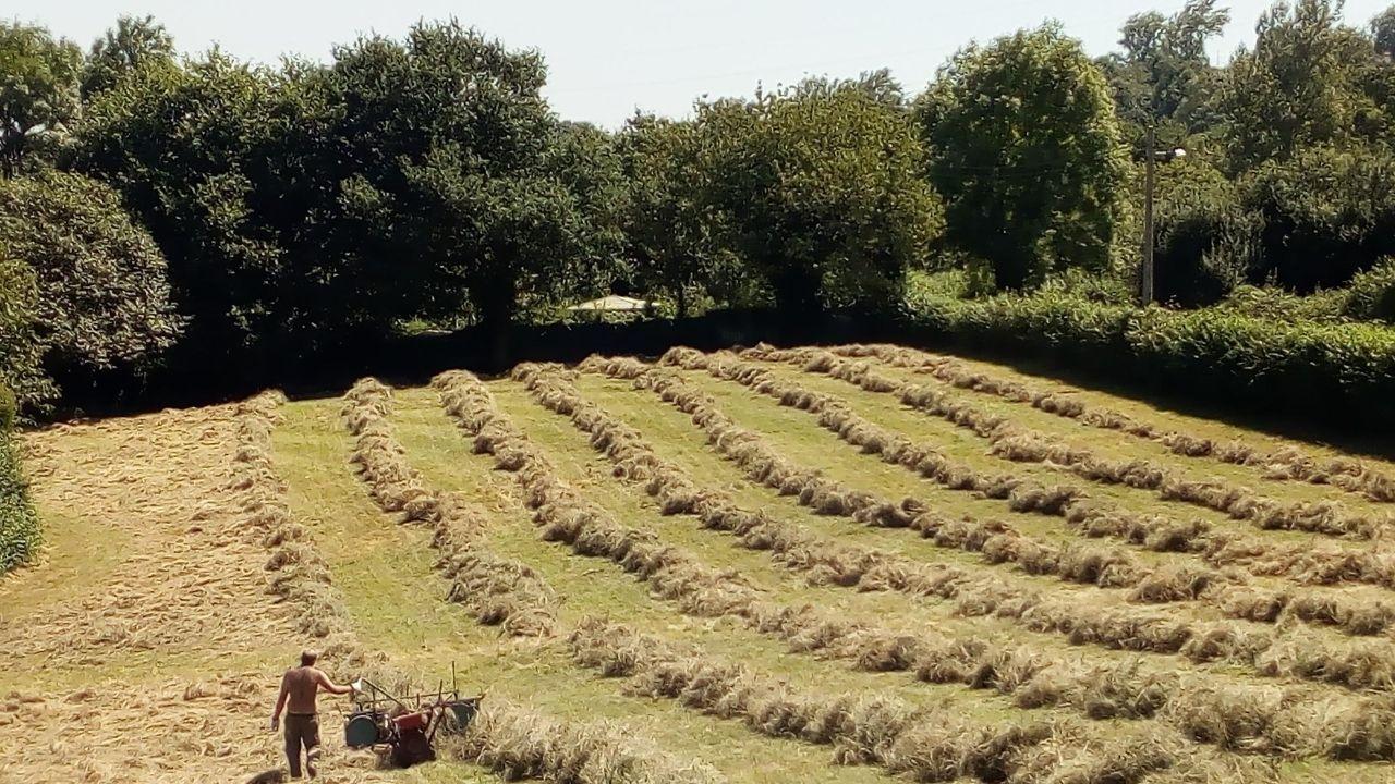 A la hierba en Pedreo, en la parroquia de San Claudio