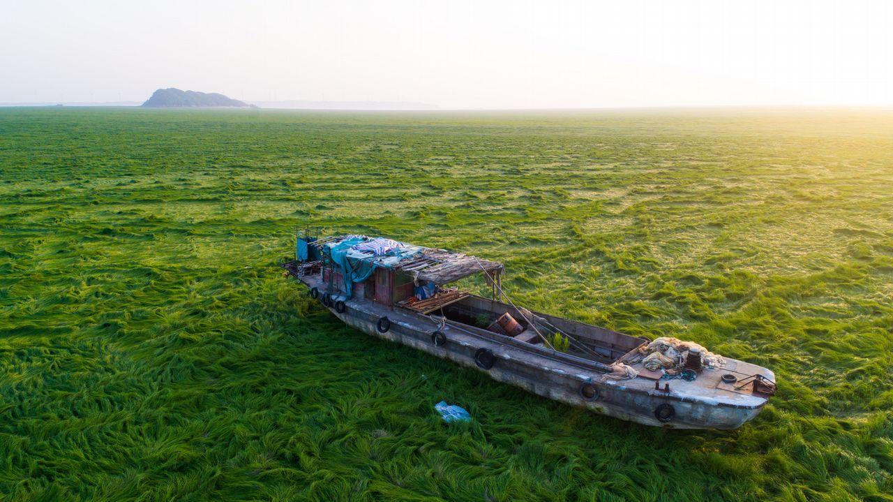 El lago Poyang en China se ha convertido en una pradera