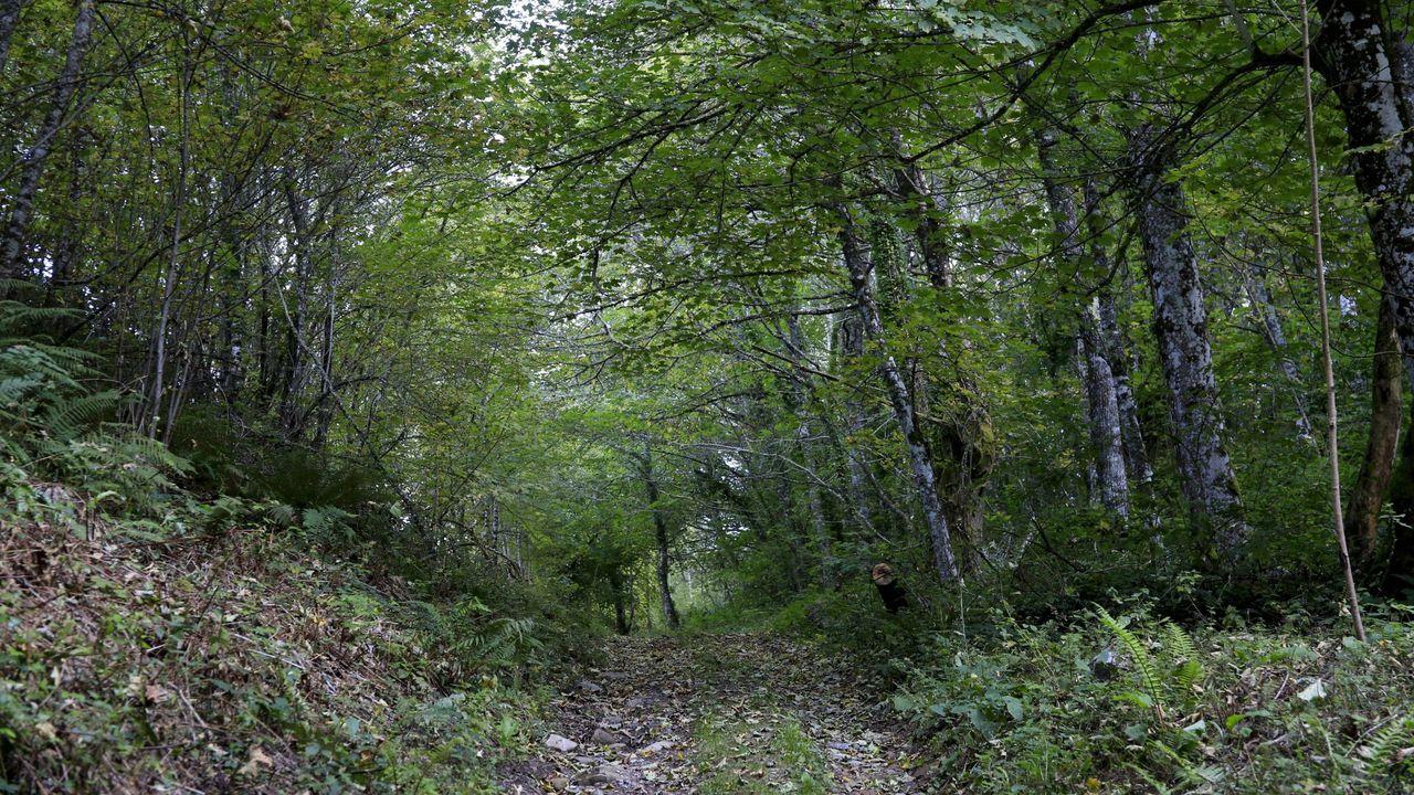 Entre las actividades figura un  paseo terapéutico  por un bosque en Taboada