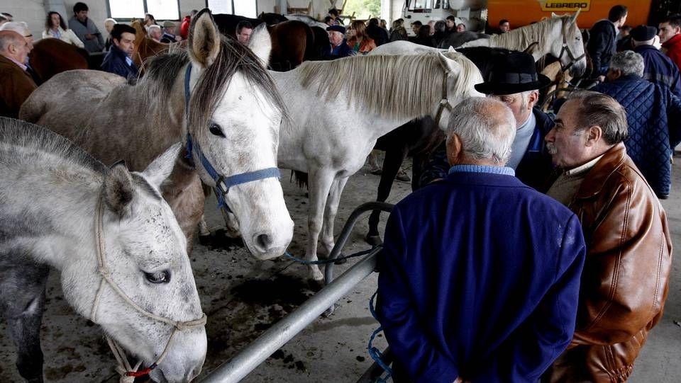 Monterroso celebró un año más la multitudinaria Feira de Santos.
