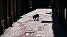 Un perro, en una imagen de archivo