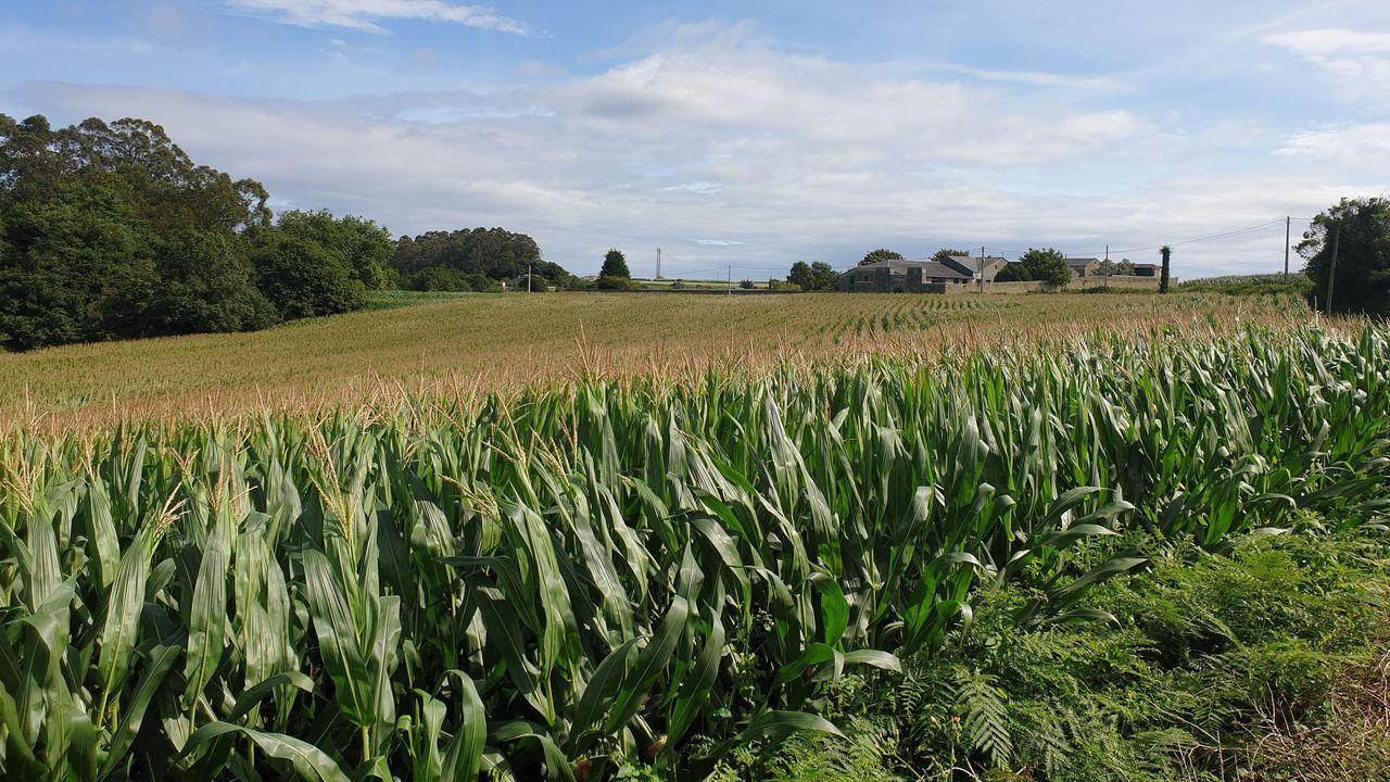 Imagen exterior de la finca Riobarba, en la que el maíz sigue siendo un cultivo muy destacado