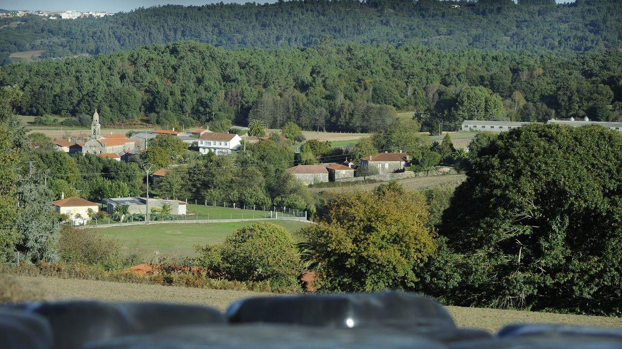 Muras presume de la mejor miel de Galicia.Vacas en un prado con la Devesa de Paderne al fondo