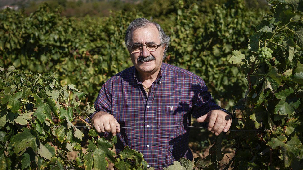 Cástor Gago, ayer, en su viñedo, donde disfruta de una de sus pasiones, la agricultura