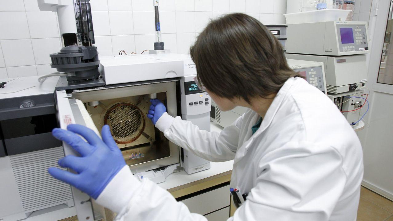 Neveras ecológicas y venas artificiales, mejores proyectos de la ciencia gallega.La autopsia al calamar gigante fue realizada en Luarca (Asturias), donde se encuentra el animal, por un equipo del IIM de Vigo y por miembros del Cepesma