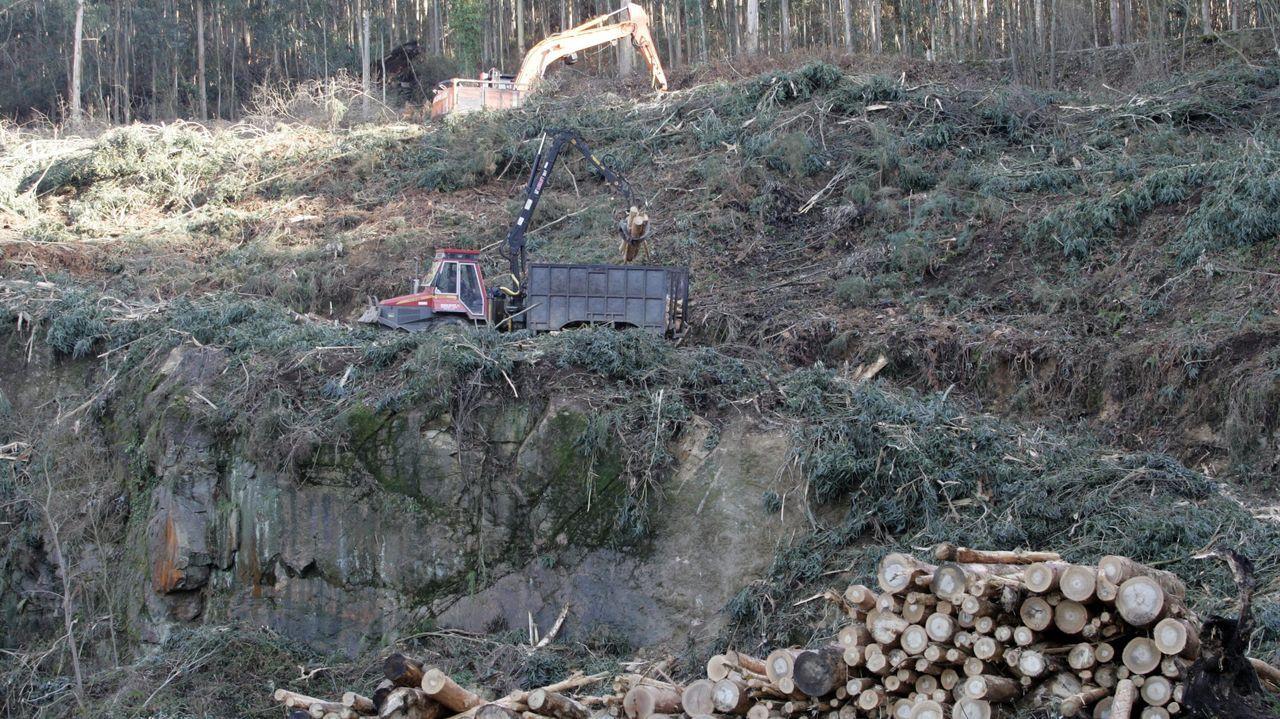 TRactor comprado por el concello de Vilalba en febrero