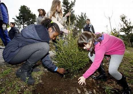 Plantación de árboles en Viveiro a través del programa.