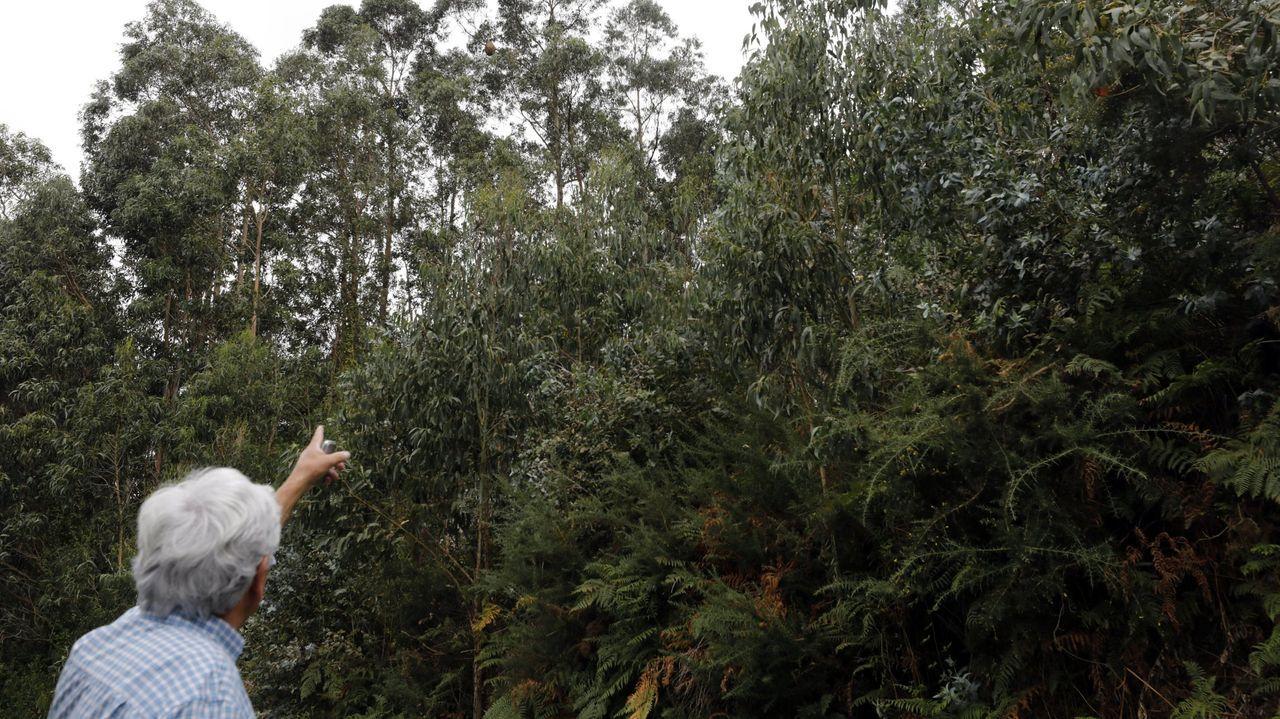 La Comunidad de Montes de Cea denuncia vertidos de uralita