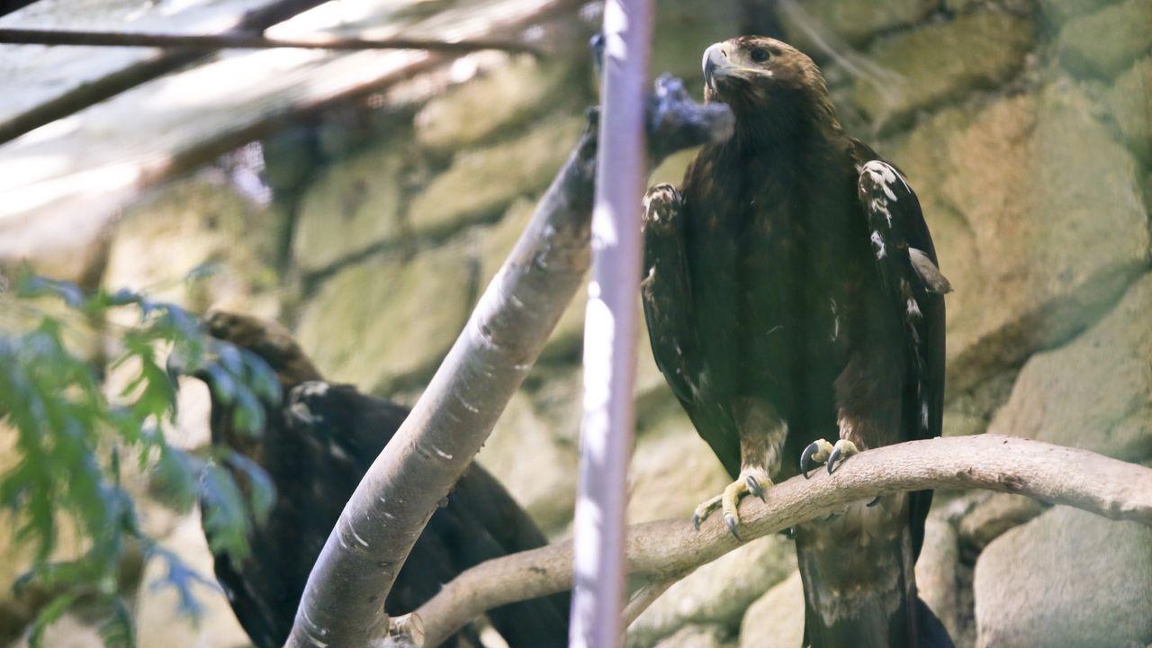 En Avifauna se pueden encontrar aves de 150 especies distintas