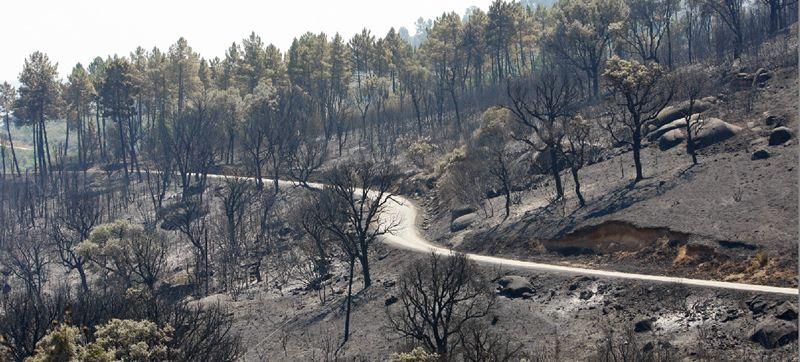 Incendio en Quiroga y Larouco.El grupo lo integran 13 personas, entre ellas el responsable de la base, Rubén Pérez Cotelo.