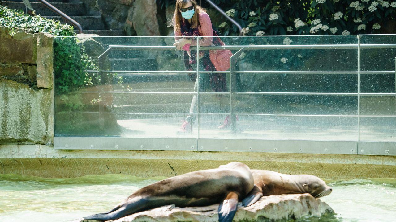 Una visitante del zoo de Berlín mira las focas ataviada con mascarilla