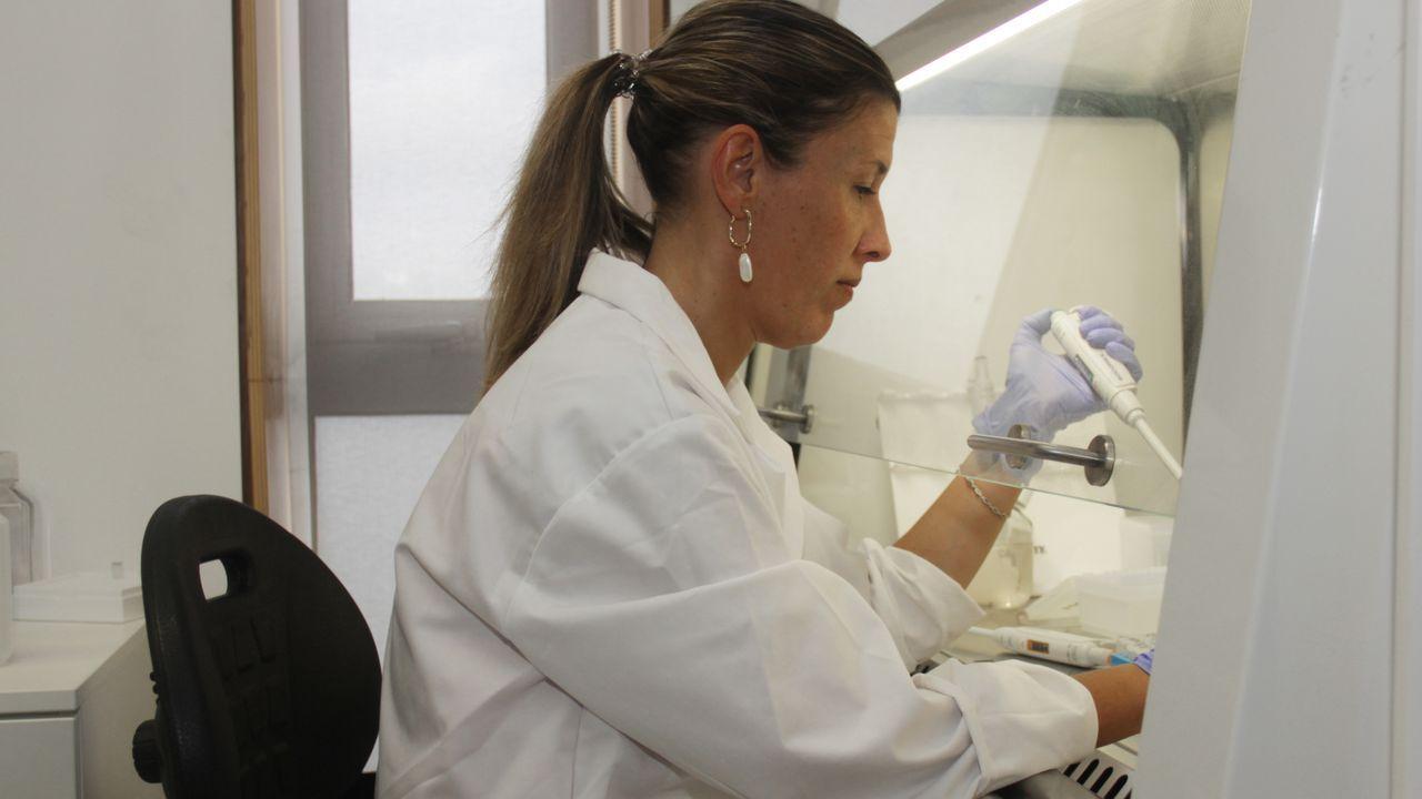intalent.Esperanza para los atletas. Ana Rey-Rico trabaja en la regeneración del cartílago. Acumula 40 artículos científicos y dos patentes protegen algunos de sus avances