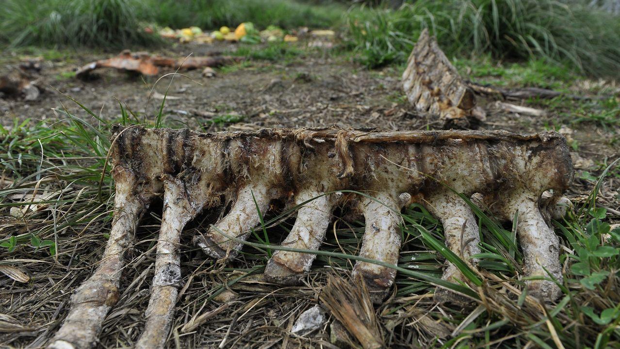 Vértebras y huesos de grandes animales yacen en la parcela
