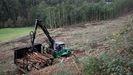 La actividad forestal está presente en muchas comarcas de Lugo