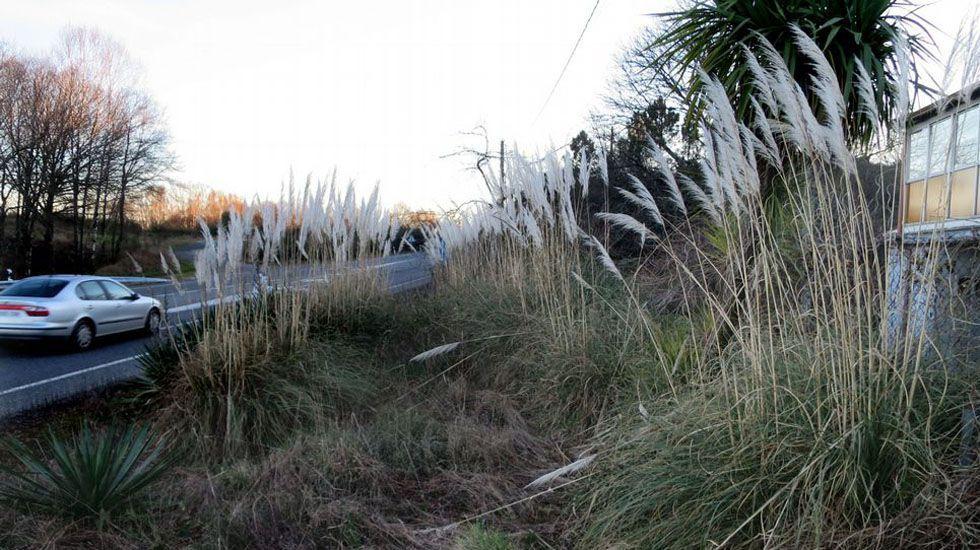 Vista de la contaminación en Oviedo.Plumeros de la Pampa, en una carretera de la zona rural