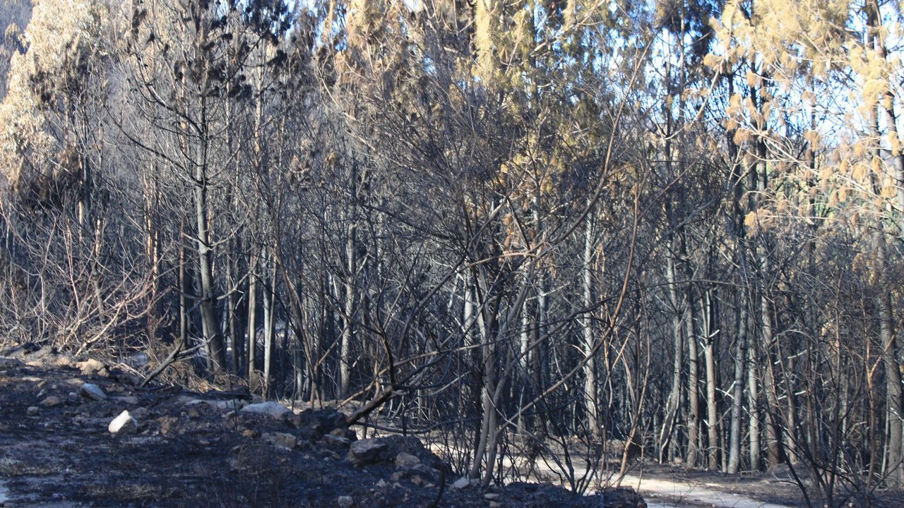 Alumnos de Carril plantan carballos y castaños en Fontefría