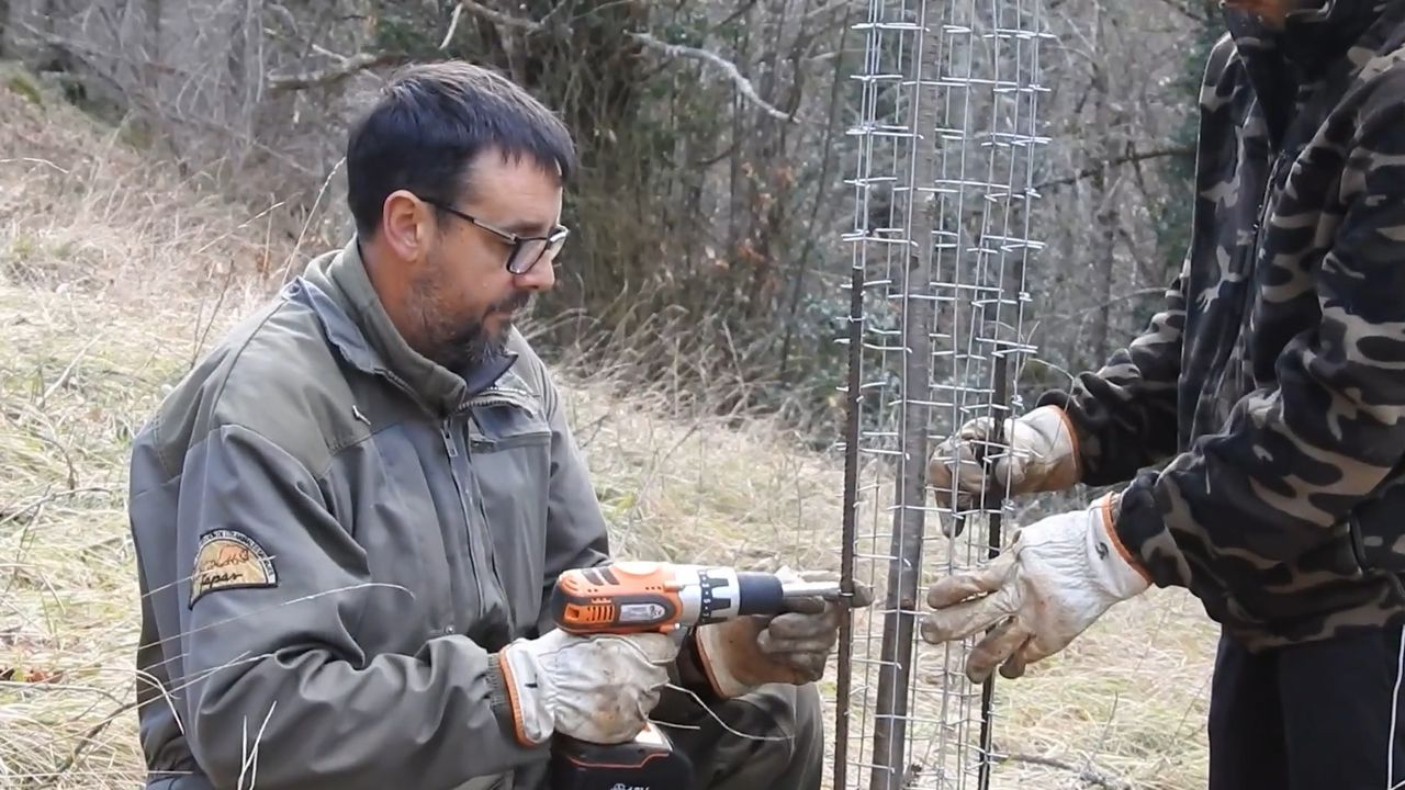 Voluntario de FAPAS colocando el sistema de protección a los cerezos plantados
