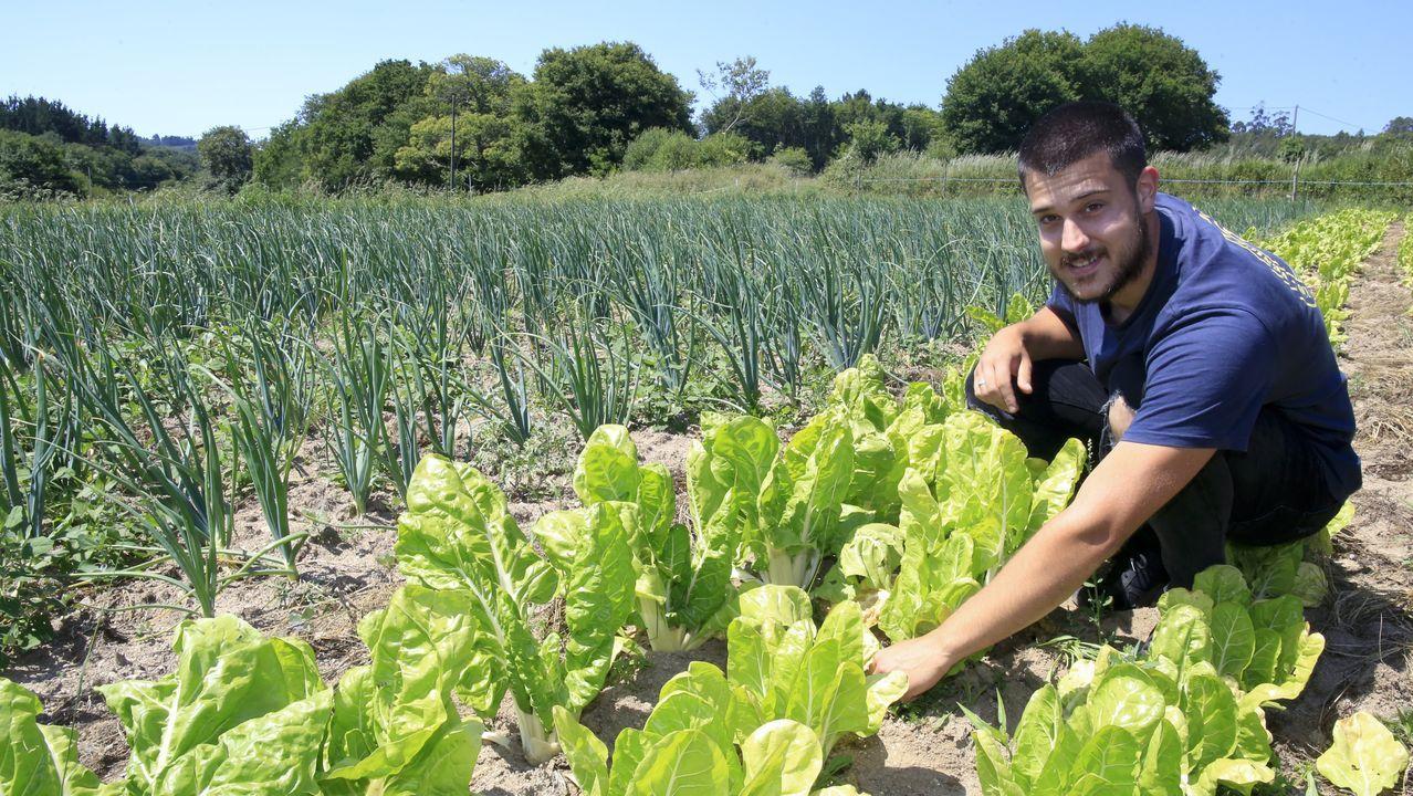 Daniel López cultiva diversas hortalizas al aire libre y en invernadero