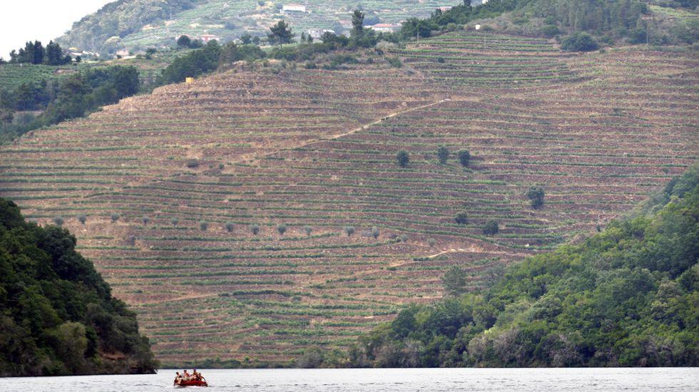 ¿Cómo podrá salir reforzado de la pandemia el sector del vino en Galicia?.Vista desde el Miño de los viñedos de la bodega Finca Míllara