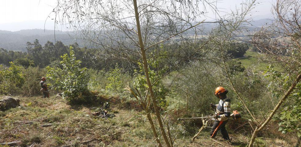 Los trabajos de limpieza y desbroce en el monte comunal de Saiar se realizan todo el año con trabajadores contratados.