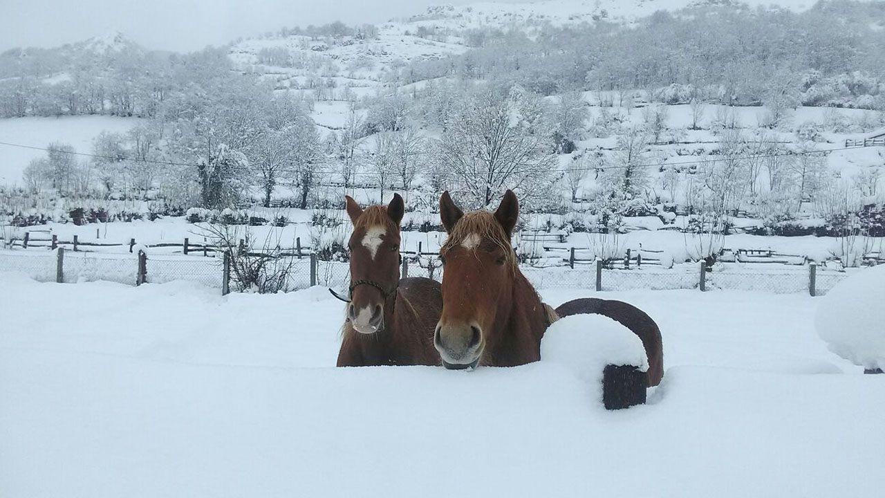 Caballos en la nieve en San Isidro