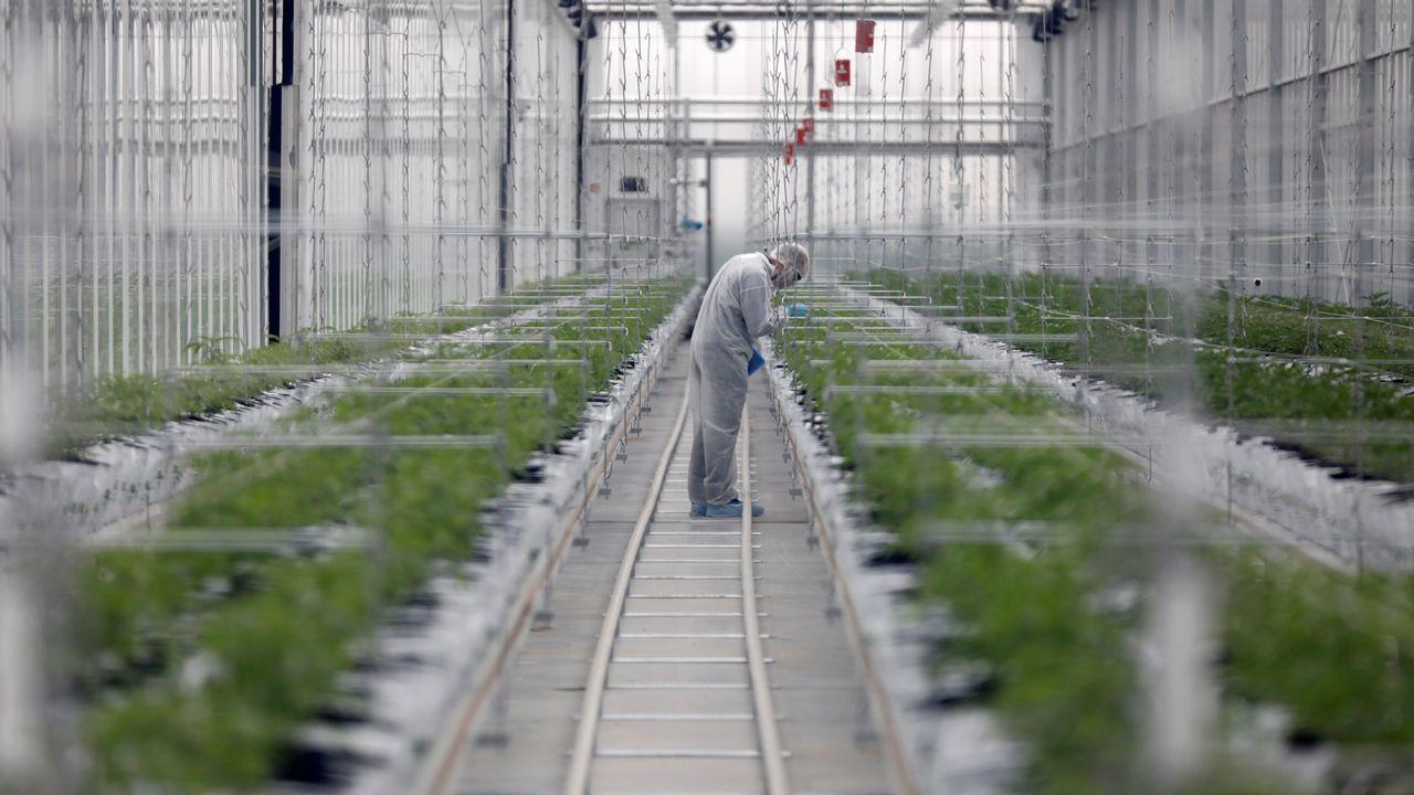la-fiebre-del-cannabis-agita-el-mercado
